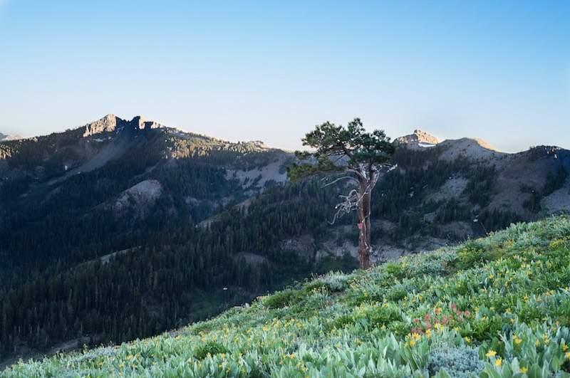 F-Tree-Alpine-Meadows-1