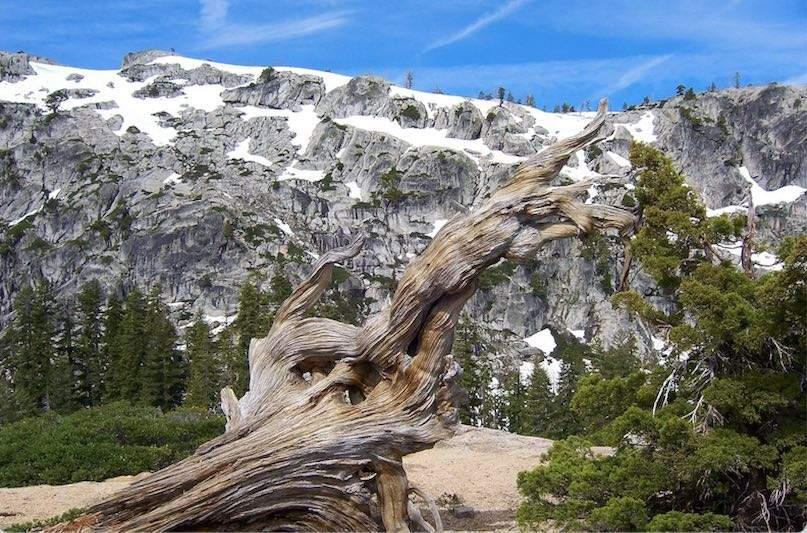 Five-Lakes-Trail-Alpine-Meadows-1