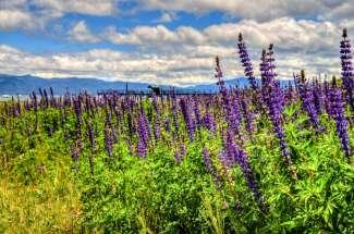 North Shore Lake Tahoe
