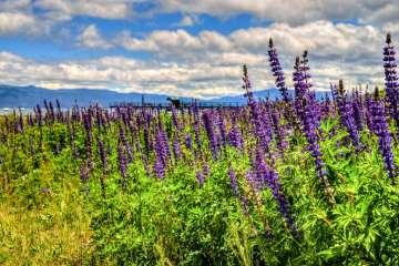 North Shore Lake Tahoe Real Estate