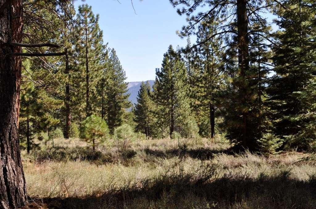 Sierra Meadows/Ponderosa Palisades