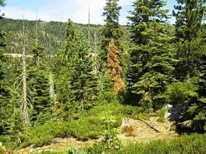 Donner Lake Lot is reduced!