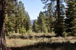 truckee lot for sale real estate